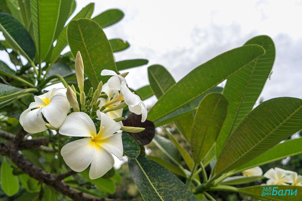 Остров Бали през януари